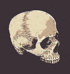 anatomic grunge skull vector image
