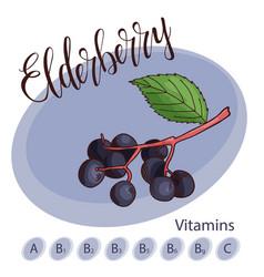 Fruit element of elderberry hand drawn vector