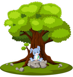 Rabbit reading book and sitting on the stone vector