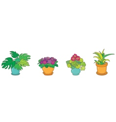 Room plants vector image vector image