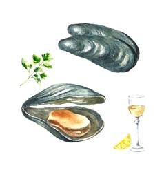 Watercolor mussels vector