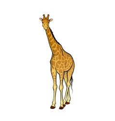 Giraffe isolated on the wite vector