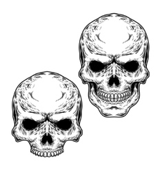 Set of two skulls vector image vector image