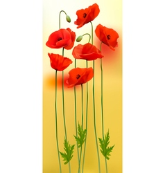 Nature background with red beauty poppies vector image