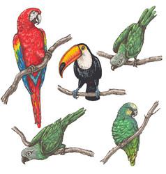 Tropical birds sketch vector