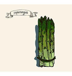 Asparagus sketch vector