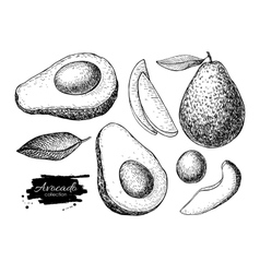 hand drawn detailed avocado set Sketch vector image