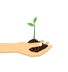 Hand holding young plant vector image vector image