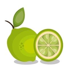Icon lemon slice design vector