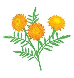 Marigold vector