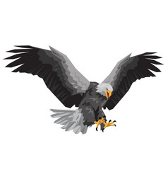 Bald eagle flying winged swoop polygon on white ba vector
