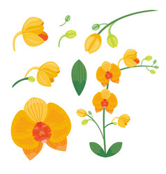 Flower summer natural plant vector