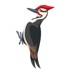Cartoon smiling woodpecker vector
