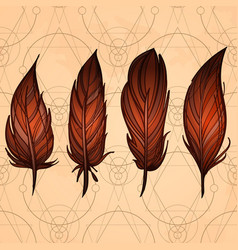 hand drawn set of feathers on the background of vector image vector image