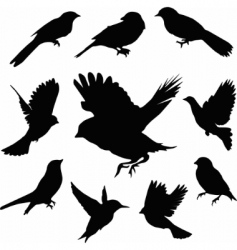 Set birds vector vector