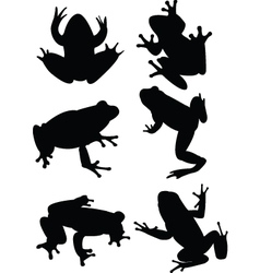 Frogs vector
