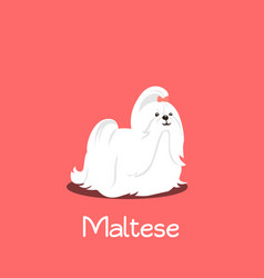 An depicting a cute maltese dog cartoon vector