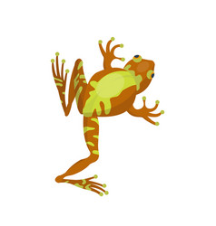 frog cartoon tropical brown animal cartoon nature vector image