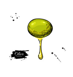 olive with oil drop hand drawn vector image vector image
