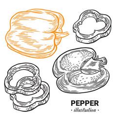 Paprika pepper fresh food hand drawn vector