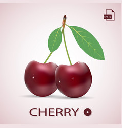 Ripe red cherries twin berries with a leaves vector