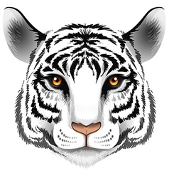 A head of a tiger vector image vector image