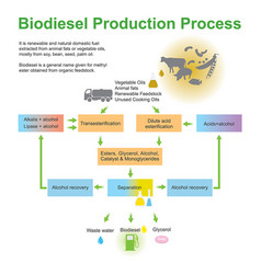 Biodiesel production process vector