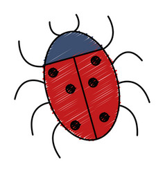 Ladybug animal isolated icon vector