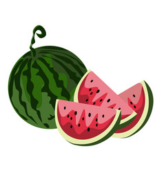 watermelon isolated on white background vector image vector image