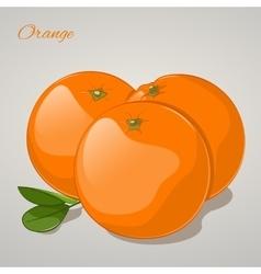 Cartoon sweet orange on grey background vector