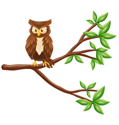 cute owl standing on branch vector image