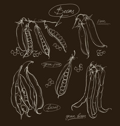 hand drawing legumes on a black backgroun vector image
