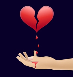 heart and blood in the hands vector image