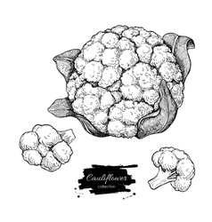 Cauliflower hand drawn vector image