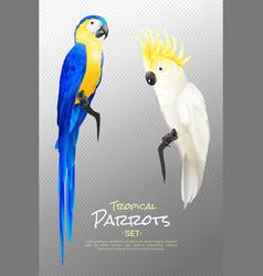 realistic tropical parrots set vector image