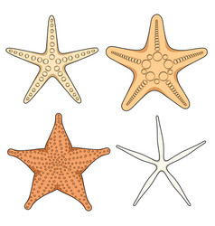 set of graphic color images of starfish vector image vector image