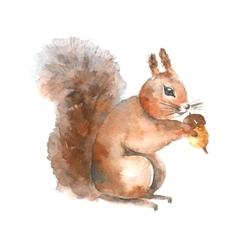 Watercolor squirrel vector image