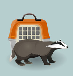 badger carry cage and animal isolated on grey vector image