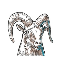 Goat head on white background vector