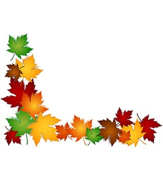 Maple leaves colorful border vector