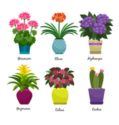 Indoor garden plants and flowers vector