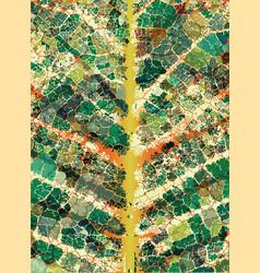 leafy veins vector image vector image