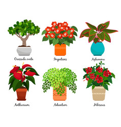 House flowers and indoor flowerpots vector