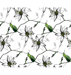 Passiflora white pattern vector