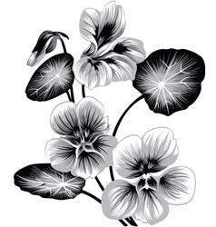 Flower of nasturtium vector