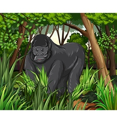 Gorilla living in the jungle vector