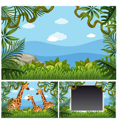 background template with giraffes in forest vector image vector image