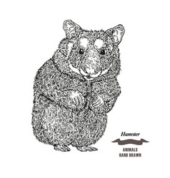 hand drawn hamster black ink sketch animal on vector image