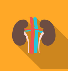 kidney icon in flat style isolated on white vector image