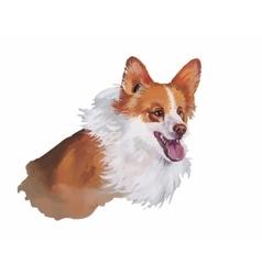 Welsh corgi pembroke Animal dog watercolor vector image